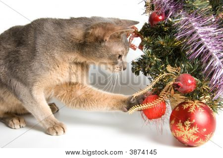 Cat Meets New Year In Studio