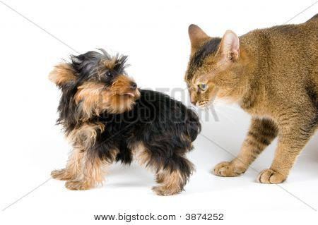 The Puppy And Cat