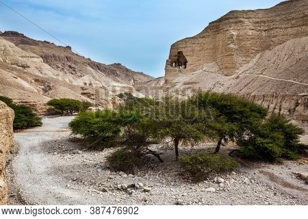 Dirt road through the canyon. Green desert acacia. The Dead Sea, Judean desert. Israel. Ancient ruined mountains of solid limestone. Traces of weathering are visible in the walls of the canyon