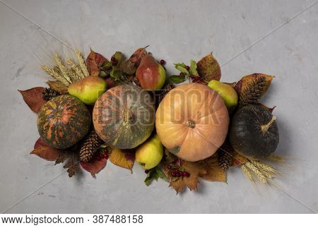 Autumn Harvest: Pumpkins, Pears, Leaves, Viburnum And Ears Of Wheat On Gray Background. Centerpieces