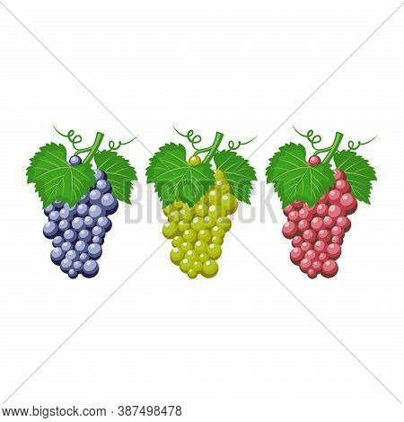 Grapes Fruit Vector Isolated On A White Background From Food And Drink Collection. Grapes In Differe