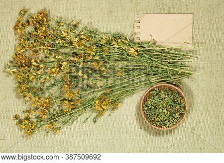 Tutsan. Dry Herbs For Use In Alternative Medicine, Phytotherapy, Spa Or Herbal Cosmetics. Preparing