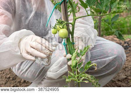 Gmo Scientist In Coveralls Genetically Modifying Tomato At Tomatoes Farm