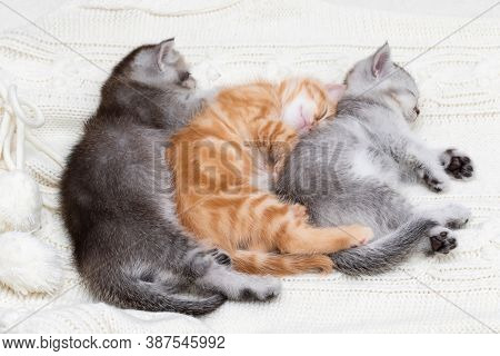 Three little kittens sleep together