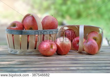 Group Of Red Apples In Little Baskets On A Wooden Table In Garden On Green Background
