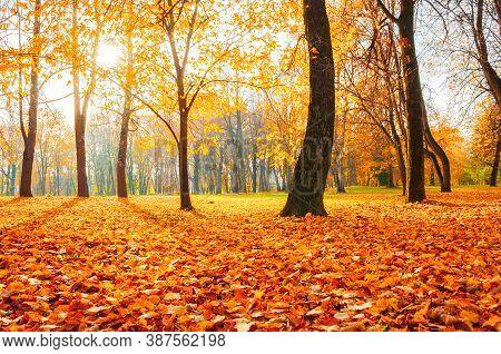 Autumn landscape. Autumn city park with golden fallen autumn leaves on the foreground. Colourful autumn park in sunny autumn morning, autumn October landscape