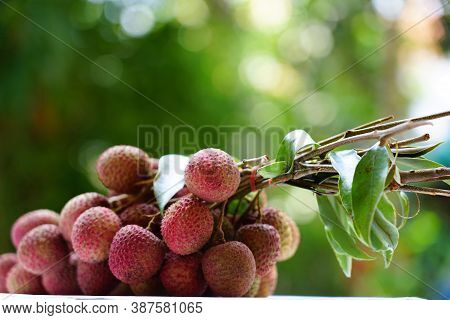 Organic fruit the fresh litchi with leaves from the garden growth and delicious in summer season