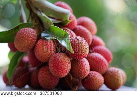 Litchi fresh organic fruit with nature leaves from the garden  delicious in summer season  of Thailand