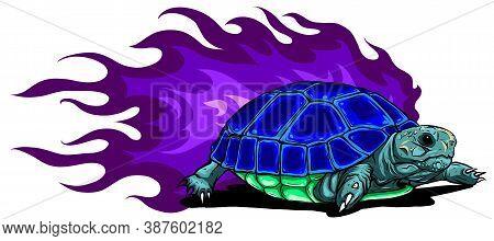 Vector Burmese Star Tortoise On White Background