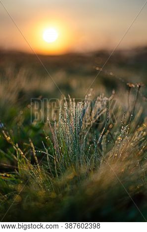 Fresh Juicy Green Grass For Summer Background