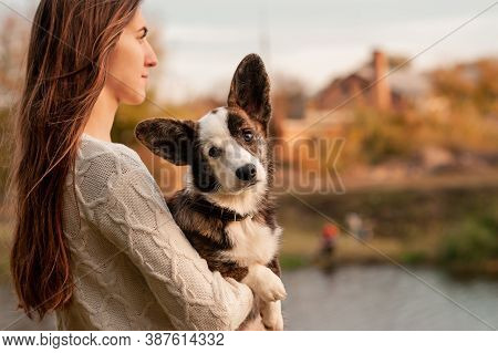 Portrait Of Young Woman Holding Her Welsh Corgi Dog In Her Arms In Autumn Park. Yellow Leaves Backgr
