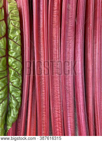 Several Stems Of Bright Red Chard Are Stacked Close To Each Other, Across A Young Green Swiss Chard