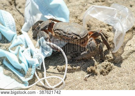 Marine Crab On Discarded Waste Pollution, Covid-19 Disease.contaminated Sea Habitat, Coronavirus Too