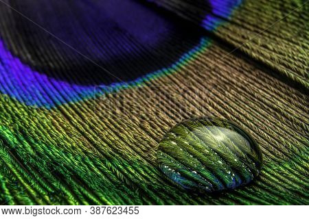 Close-up View Of A Drop Of Water On A Colored Peacock Feather