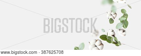 Flying Cotton Flowers, Green Twigs Of Eucalyptus On Light Gray Background. Creative Floral Backgroun