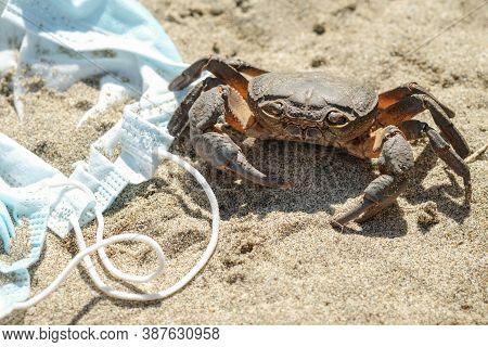 Marine Sea Crab On Discarded Waste Pollution, Covid-19 Disease.contaminated Ecosystem, Coronavirus G