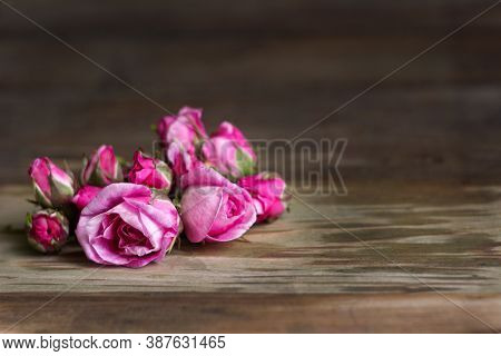 Buds And Blossoming Flowers Of A Pink Teahouse, Wooden Background, Place For Text. Bright Beautiful
