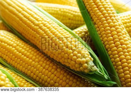 Ripe Sweet Fresh Corn On Cobs, Closeup. Summer Healthy Vegetables.food Background