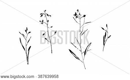 Hand Drawn Wild Plants Collection. Outline Flower With Leaves Painted By Ink. Black Isolated Sketch
