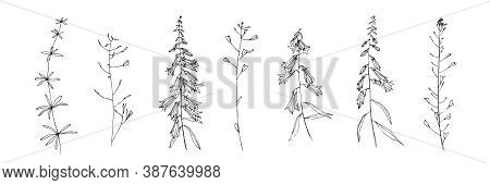 Hand Drawn Wild Plants Collection. Line Flower With Leaves Painted By Ink. Black Isolated Sketch Vec