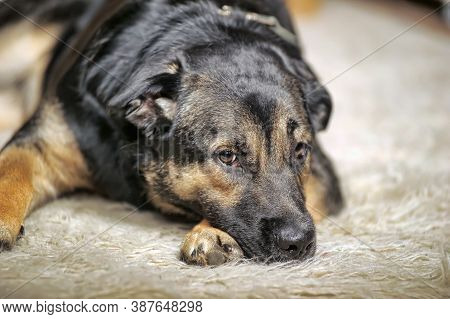 An Elderly Sad Dog Alone