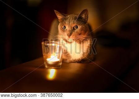 Gray Cat That Looks At The Candle. The Feeling Of Comfort. Magical Look. Home Cosy Concept.