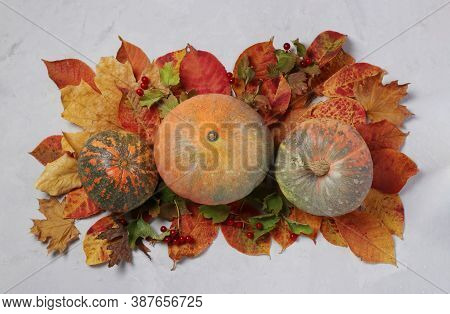 Autumn Harvest: Pumpkins, Leaves And Viburnum On Gray Background. Centerpieces Thanksgiving Day. Vie