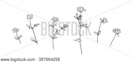 Set Of Hand Drawn Wild Flowers. Outline Floral Collection Painted By Ink. Black Isolated Sketch Vect