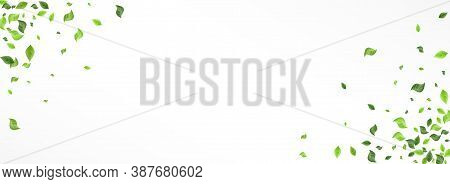 Lime Foliage Organic Vector Panoramic White Background Backdrop. Motion Greenery Branch. Swamp Leaf