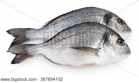 Fish Dorado Isolated On White Background With Clipping Path And Full Depth Of Field.