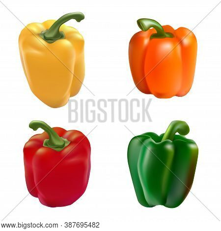 Vector Realistic Illustration Of Vegetables. Yellow, Red, Green And Orange Peppers.