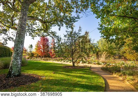 Garden Or Park Design With Colorful Trees In Autumn Colors And A Small Walkway