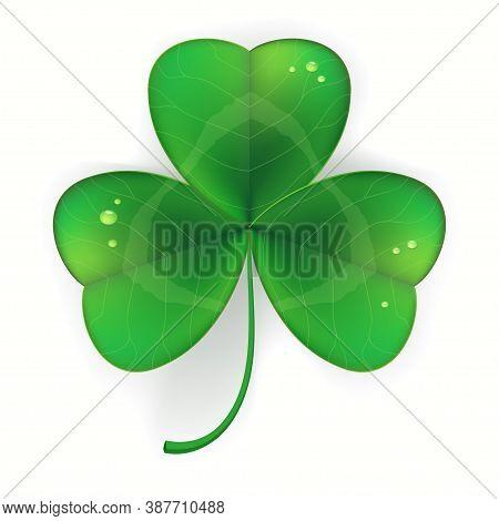 Clover Shamrock Realistic, Saint Patricks Day Symbol. Vector Illustration