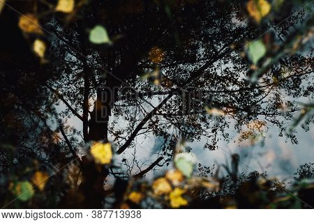Reflection Of A Tree In A Puddle In The Forest Top View. Natural Background. Autumn Leaves On The Wa
