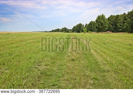 Summer Background. A Field Road Overgrown With Grass In The Middle Of A Meadow. Grasslands.