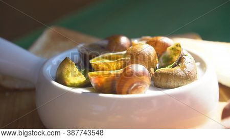 Snail Farm, Growing Snails, Snails Close-up. Snail Climbs On Another Snail Shell Slow Motion. Organi