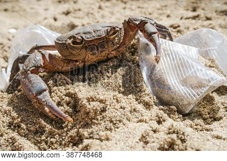 Marine Sea Crab Living On Plastic Glasses Waste Pollution.dirty Contaminated Ecosystem, Pollution Da