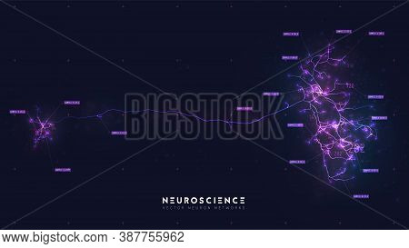 Neuron System Model. Neural Net Structure. Research Of The Human Nerve Network. Digital Artificial O