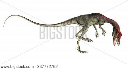 Compsognathus Dinosaur Roaring Isolated In White Background - 3d Render