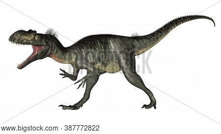 Megalosaurus Dinosaur Roaring Isolated In White Background - 3d Render