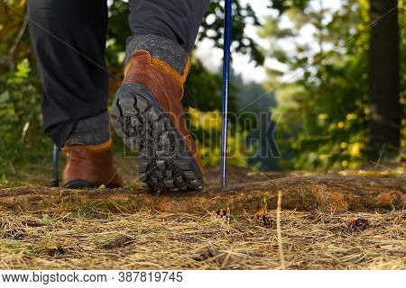 Man Hiking In The Woods In Autumn Pine Forest. Men Boots Walking In The Woods On Sunny Day. Hiking C