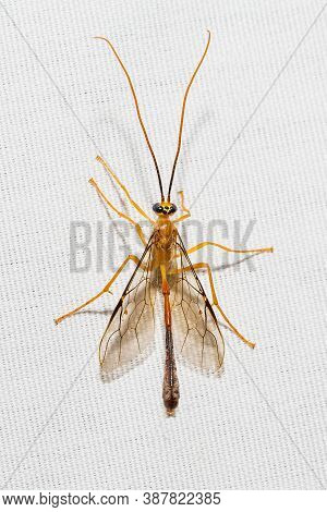 Nocturnal Insects Perch On White Canvas Background