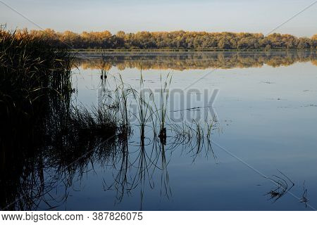 Autumn Morning On A Quiet Lake. Reeds Are Reflected In The Smooth Surface Of The Water. A Haze Is Sp