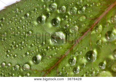 Macro Rain Droplets On Leaf