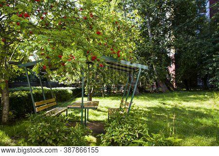 Wooden Gazebo In The Garden Under A Tree Ripe Rowan. Rowan Berries