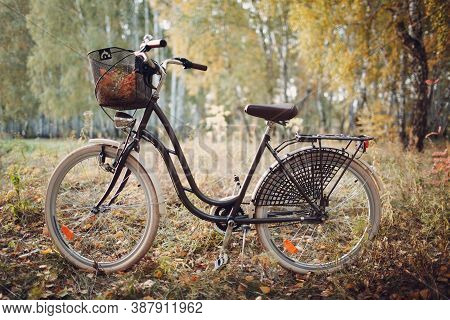 Vintage Woman Bicycle With Basket In Autumn Park