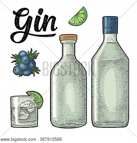 Glass, Bottle And Branch Of Juniper With Berries. Handwriting Calligraphic Lettering Gin. Vintage Ve