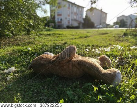 The Bear Is Thrown On The Lawn, Cotton Wool Is Scattered Around.