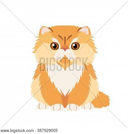 Vector Portrait Of Funny Red Persian Cat Isolated On White Background