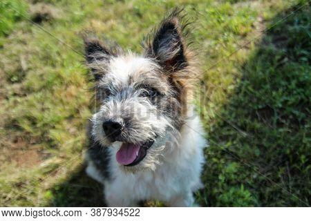 Dog Looking At The Camera - Dog Smiling At Camera - Happy Dog Outside